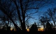 31st Mar 2017 - Tree at sundown