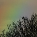 The return of the rainbow by helenhall