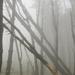 My Forest by yaorenliu
