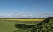1st Apr 2017 - Fields turning yellow...