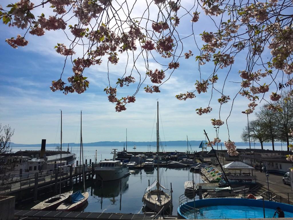 Neuchâtel lake.  by cocobella