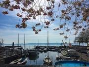 29th Mar 2017 - Neuchâtel lake.