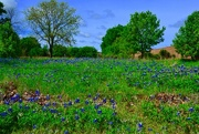 2nd Apr 2017 - Bluebonnets and blue skies!