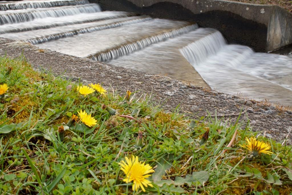 Dandelion Falls by granagringa