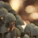 fungi by kali66