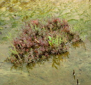 5th Apr 2017 - Colour in the mud flats,