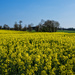PLAY April - Fuji 27mm f/2.8: Countryside Colours by vignouse