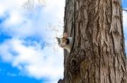 5th Apr 2017 - chasing squirrels