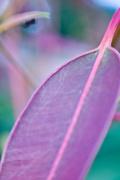 7th Apr 2017 - Leaf with Ant