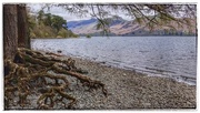 6th Apr 2017 - Coniston Water - loved the tree roots!