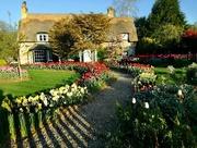 7th Apr 2017 - Cottage Garden