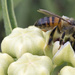 Bee Obsessed by gaylewood