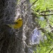 Prothonotary Warbler-LHG_3208
