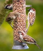 10th Apr 2017 - Four Birds