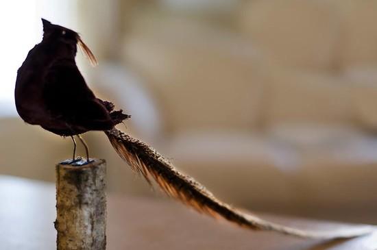 Proud Bird  by greenpeg