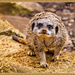 """""""I've Been Playing In The Sand"""" by carolmw"""