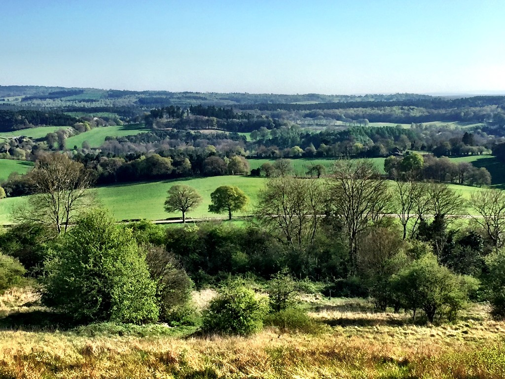 Newlands Corner, North Downs way by jclaireyp