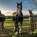 Horses by rjb71