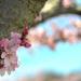 Springtime by loweygrace