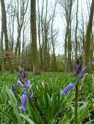 10th Apr 2017 - Bluebell Wood Fail