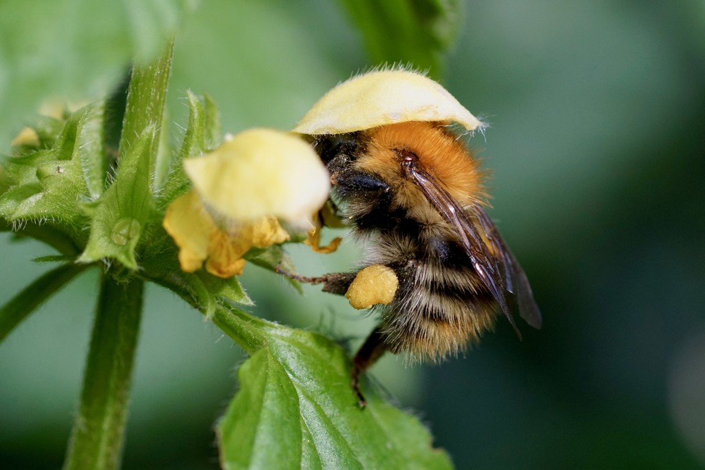 BUSY BEE by markp