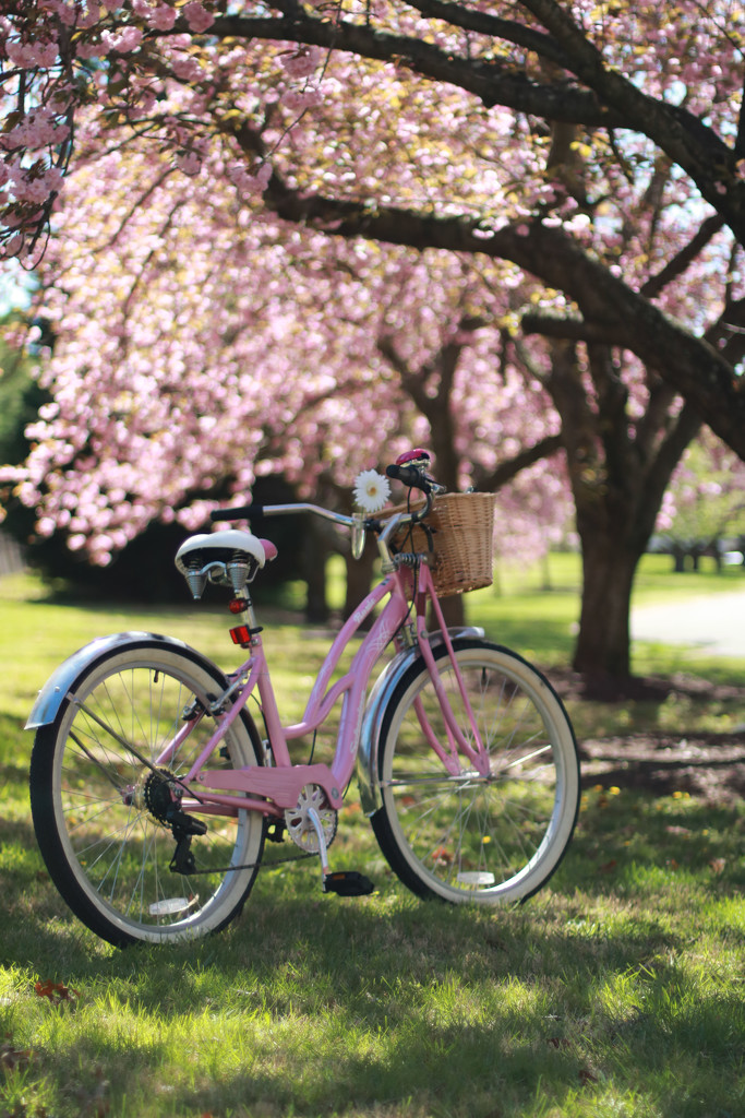 Bike and Blossoms by lynbonn