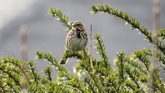 Noisy little birdie. by maggie2