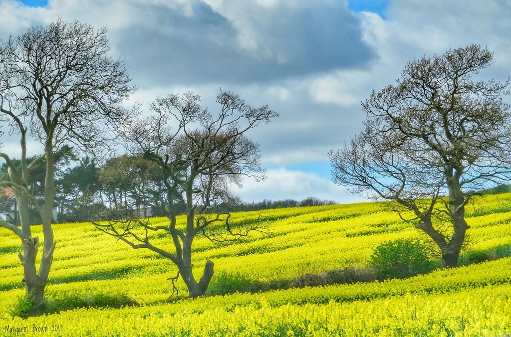 So very yellow! by craftymeg