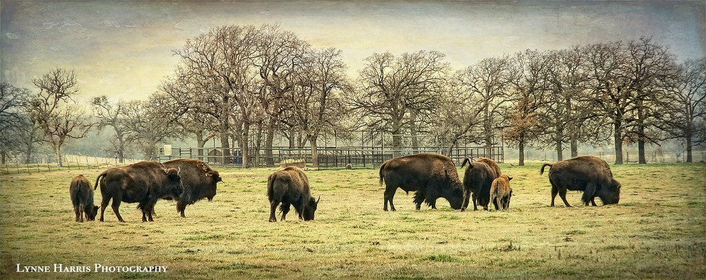 Home on the Range by lynne5477