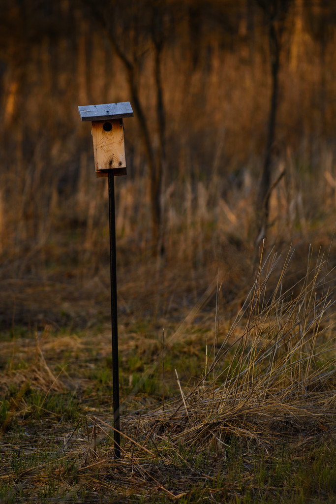 bird box by jackies365