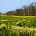 Spring in Buena