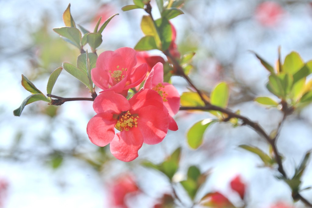 25th day of spring by lynnz