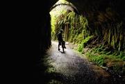 11th Apr 2017 - Trail tunnel