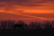12th Apr 2017 - Horse with Slanted Streak at Sunrise