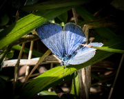 10th Apr 2017 - First butterfly.......