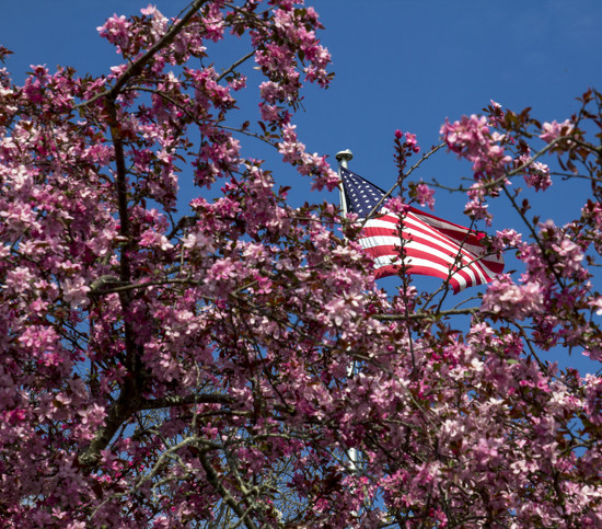 Flowering Tree by hjbenson