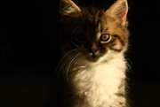 13th Apr 2017 - pussy cat, pussy cat