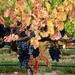 It's Beginning To Look Like Autumn _DSC8131 by merrelyn
