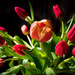 PLAY April - Fuji 27mm f/2.8: Tulips by vignouse