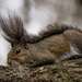 Lazy Squirrel! by rickster549
