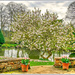 Magnolia Tree,Coton Manor Gardens