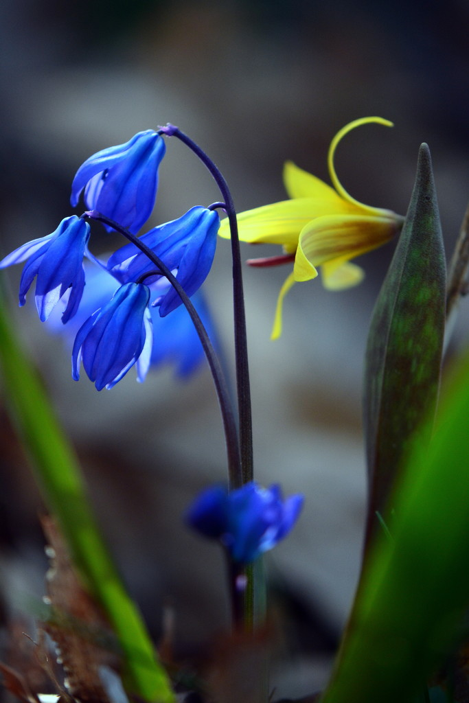 Blue and yellow by jayberg