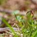 Spring Gardening by predi