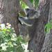 backache cure by koalagardens