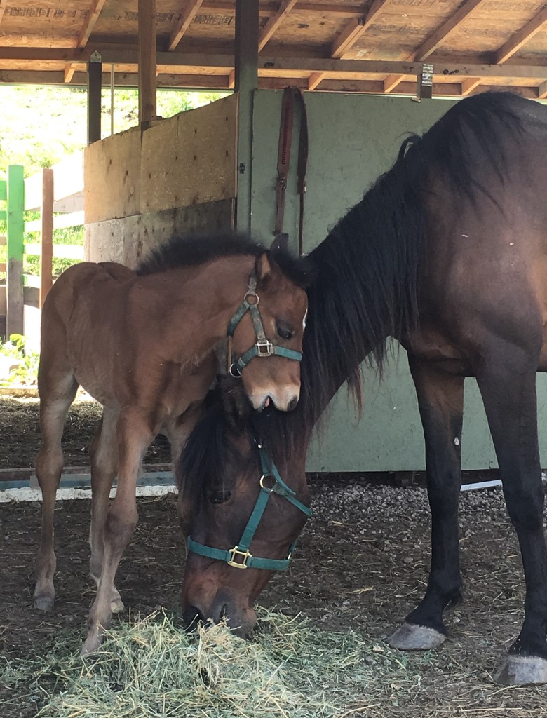 New Colt by handmade