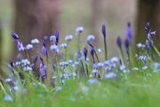 17th Apr 2017 - A Little Blue In The Churchyard