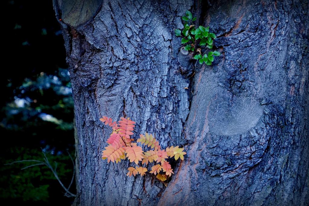 Autumn by dkbarnett