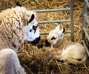 19th Apr 2017 - Mother and baby