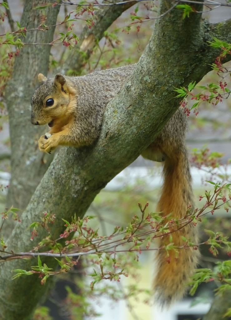 Relaxed squirrel eating by annepann