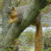 Relaxed squirrel eating